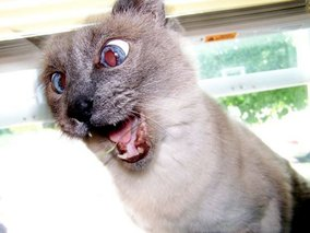 В Тамбовской области животные стали чаще болеть бешенством