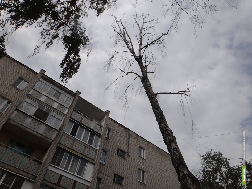 Тамбовский двор превратился в кладбище деревьев