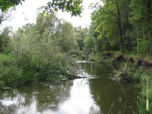 Качество воды в тамбовских реках не меняется