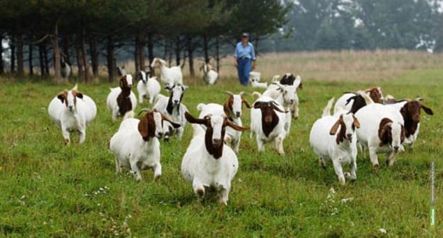 В развитие фермерства на Тамбовщине государство вложит почти 30 миллионов рублей