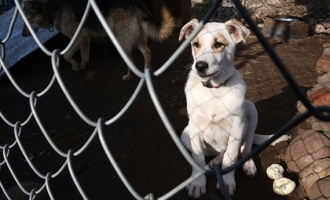 В регионе число случаев бешенства у животных снизилось в семь раз
