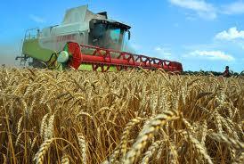Федеральная казна поддержит аграриев Тамбовщины
