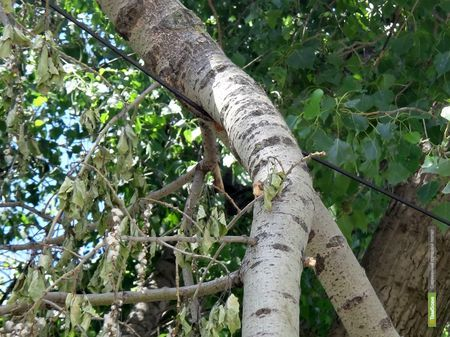 Последствия урагана до сих пор беспокоят тамбовчан