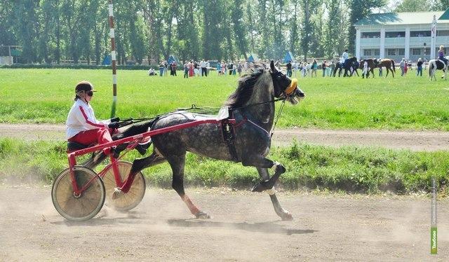 В Тамбове пройдет конноспортивное соревнование