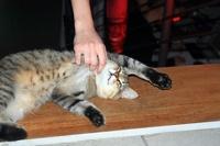 Госдума вводит штрафы за нарушение правил содержания кошек и собак