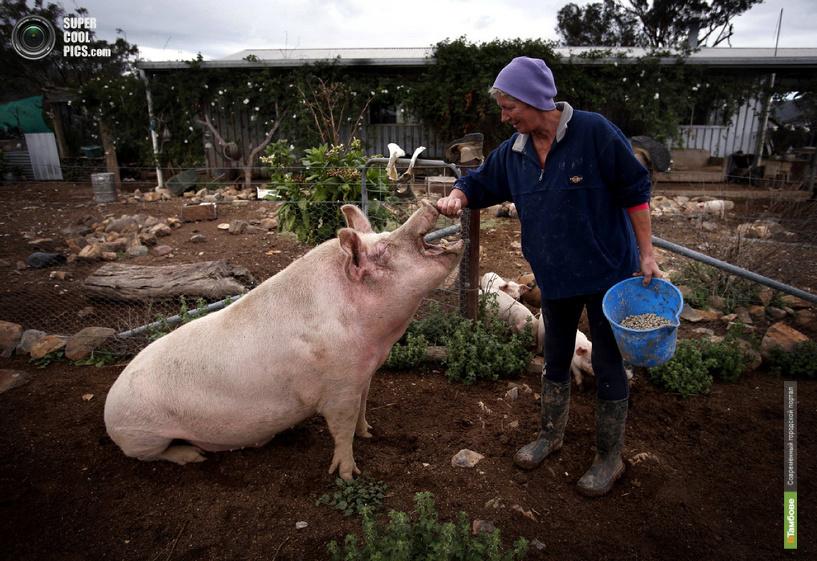 На Тамбовщине продолжат поддерживать начинающих фермеров