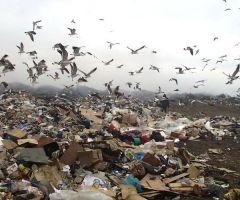 Экологические ревизоры едут в Тамбов
