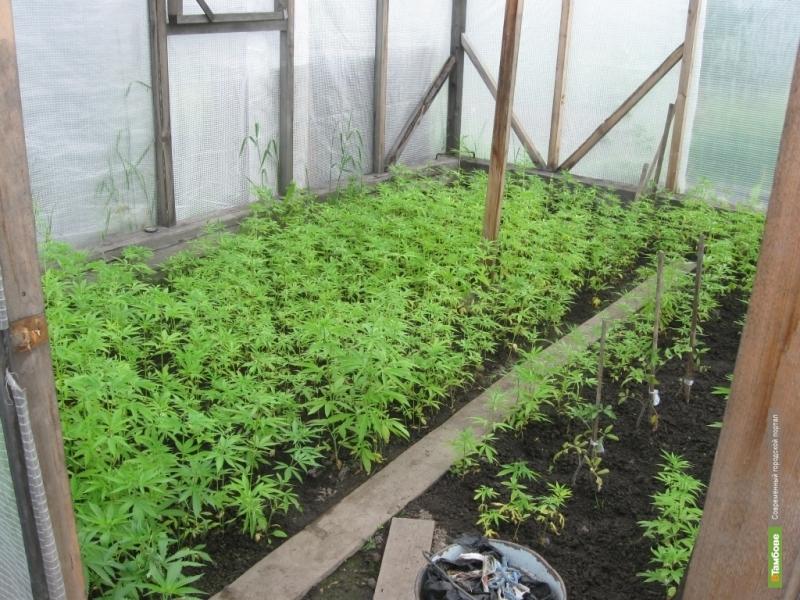Тамбовчанин получил условный срок за выращивание марихуаны