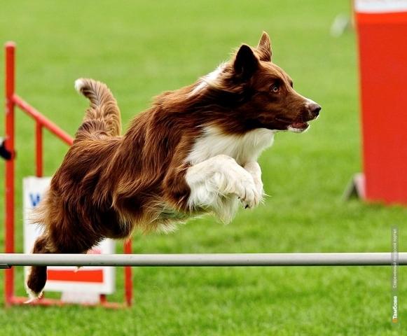 На открытии бегового сезона тамбовчанам покажут собачий конкур