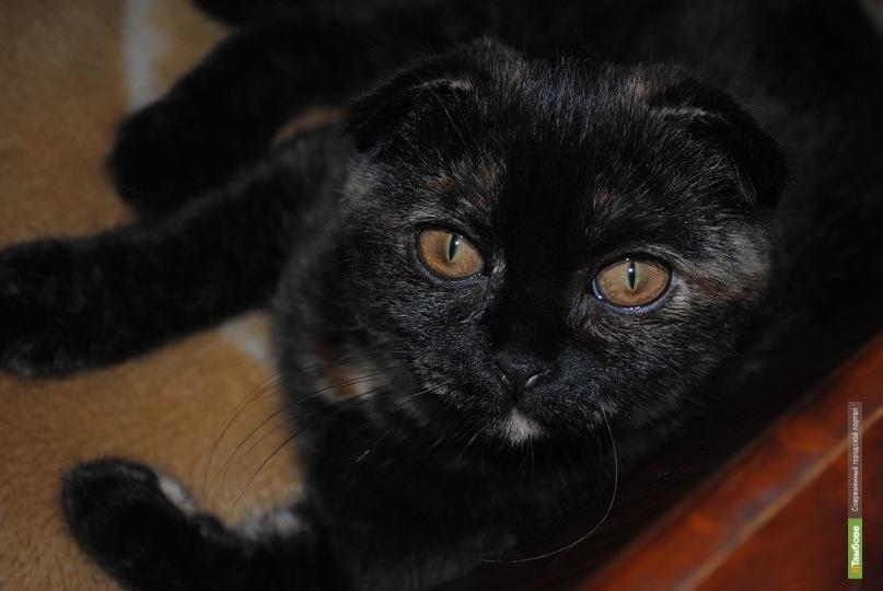 """Тамбовская кошка """"умыла"""" своих собратьев"""