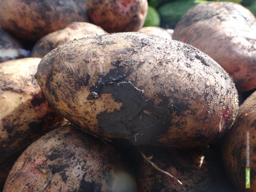 Тамбовские овощи взяли «золото» на международной выставке