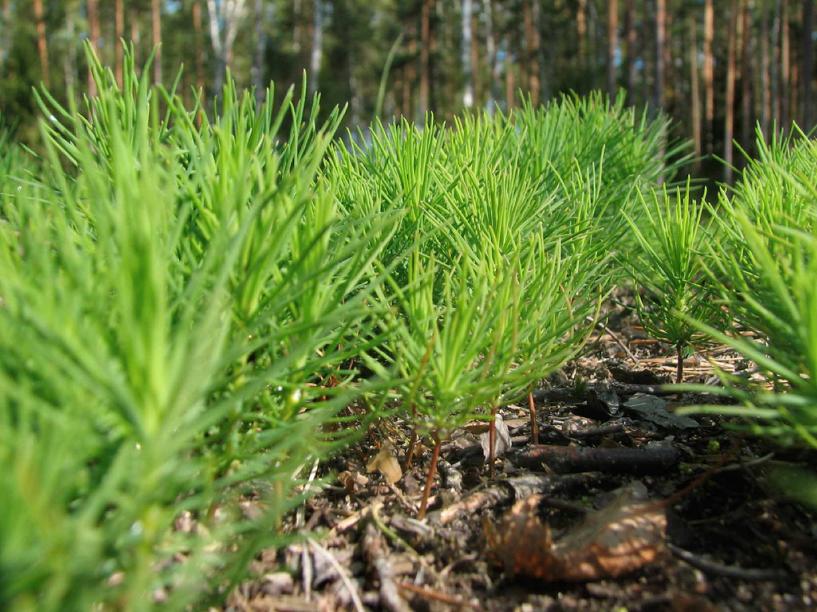 Специалисты заготовили семена для проведения работ по воспроизводству леса