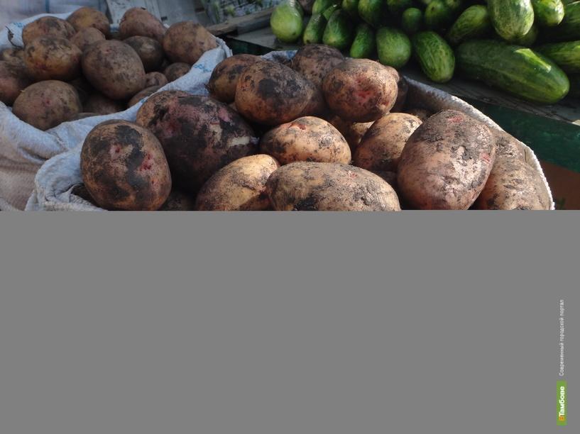 Губернатор распорядился сделать запасы картофеля для бюджетных учреждений