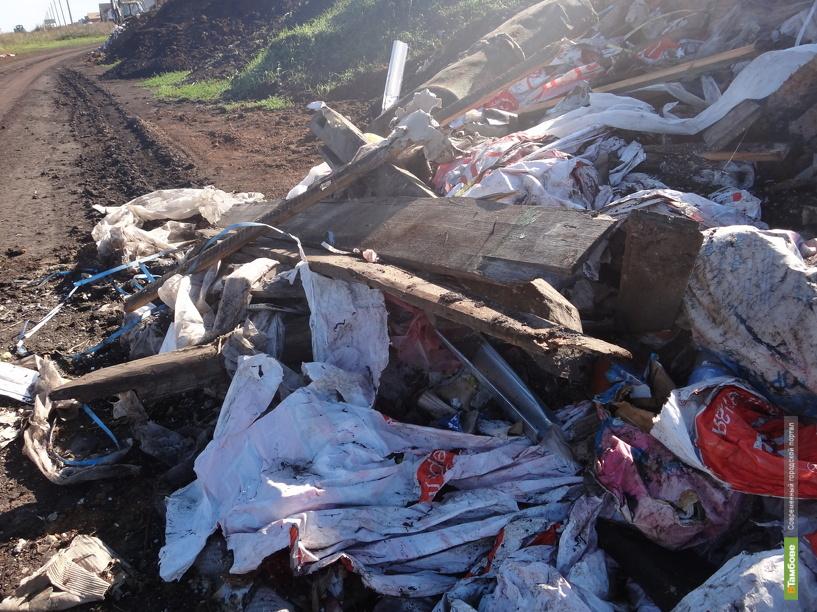 Тамбовская компания незаконно вырубила лес на 21 миллион рублей и устроила там свалку