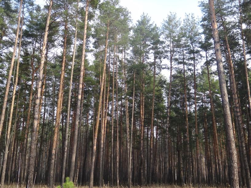 Пожарную обстановку в тамбовских лесах начали отслеживать с воздуха