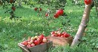 На Тамбовщине заложат 512 гектаров новых садов