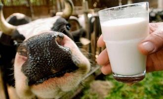 В этом году ситуация с бешенством животных в области спокойная