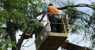 Тамбовчанам придётся платить, чтобы избавиться от деревьев во дворе
