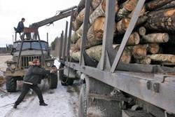 Тамбовские лесоводы пополнили бюджет на 10 миллионов рублей