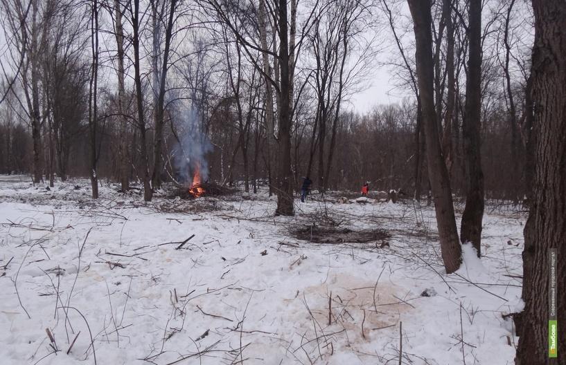 Полицейские нашли заблудившуюся в лесу тамбовчанку