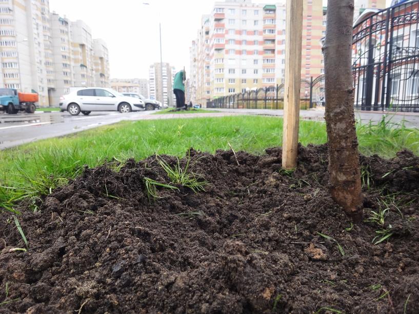Тамбовский чернозём станет частью проекта «Россия – наш общий дом»