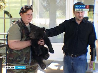 Трехмесячные тамбовские медвежата станут московскими циркачами