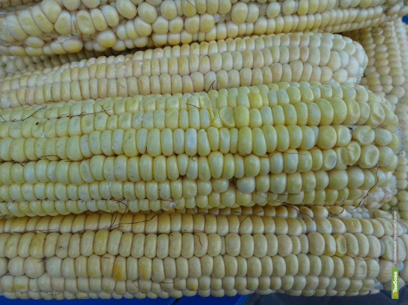 Тамбовчанин пытался «обчистить» кукурузное поле