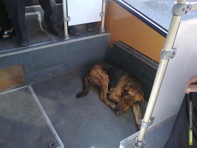Тамбовчане ездят в автобусах с бездомными псами