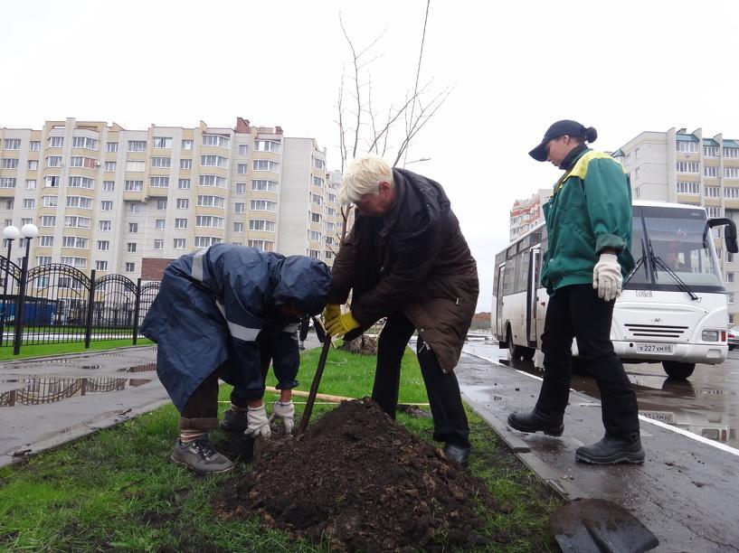 Тамбовчанам разрешат озеленять городские территории