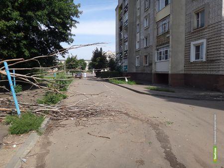 В Тамбове рядом со спортшколой рухнуло дерево