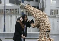 В Шотландии добрый жираф раздает прохожим кофе и фрукты
