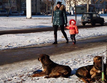 В районах Тамбовщины нет денег на собачьи питомники