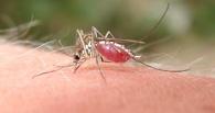 Ученые предложили вакцинировать комаров, чтобы они не переносили малярию