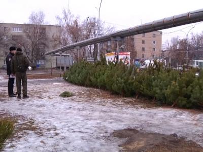 В Тамбове мужчина украл елку с уличного базара