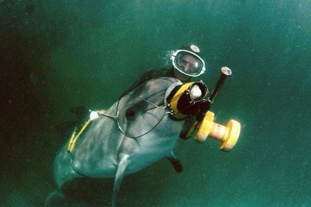 Крымские боевые дельфины готовы выполнять приказы Президента