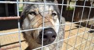 В державинском зоопарке родились волчата