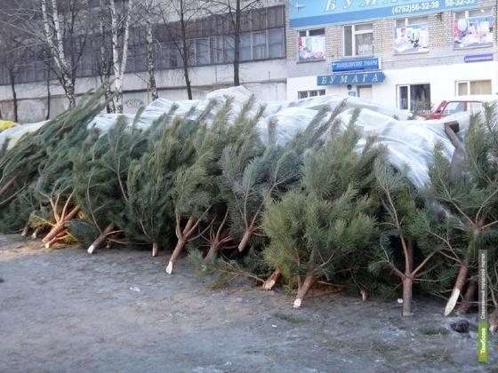 Новогодние елки тамбовчан после праздников пойдут на щепу
