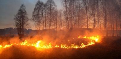 Первые тёплые выходные добавили забот тамбовским пожарным
