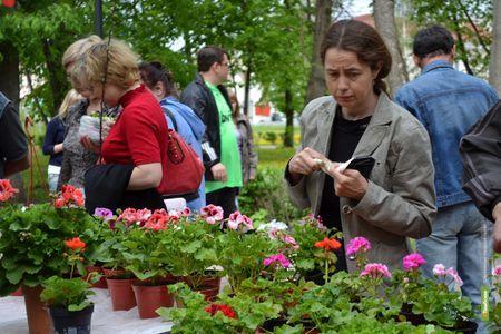 В Тамбове развернется цветочный базар