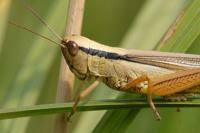 ООН порекомендовала людям есть насекомых