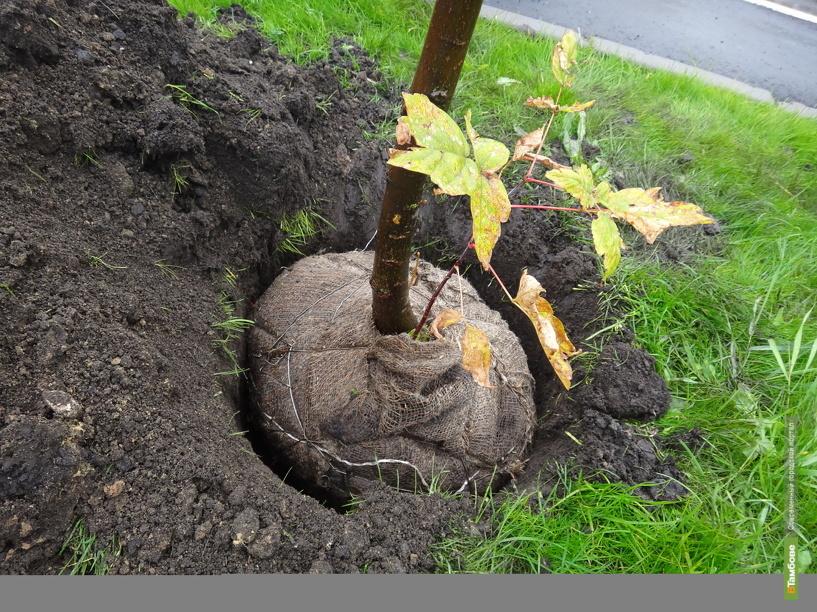 Державинцы высадили 40 гектаров леса