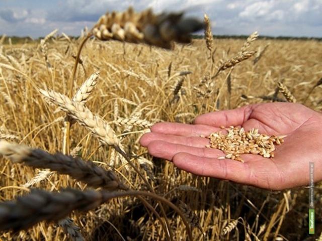 Тамбовские хлеборобы собрали 2 миллиона тонн зерна