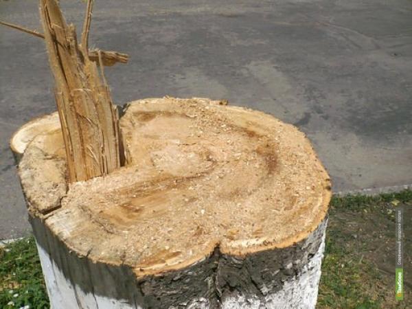 За полгода в Рассказово спилили 113 аварийных деревьев