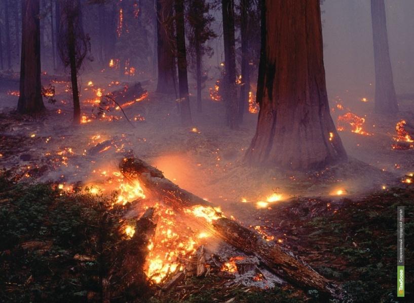 Тамбовчанка подожгла волгоградский лес
