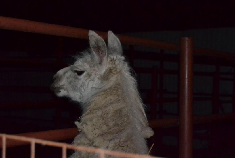 Тамбовчане смогут прогуляться по ночному зоопарку