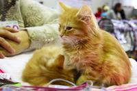 Ученые объяснили, почему кошки игнорируют хозяев