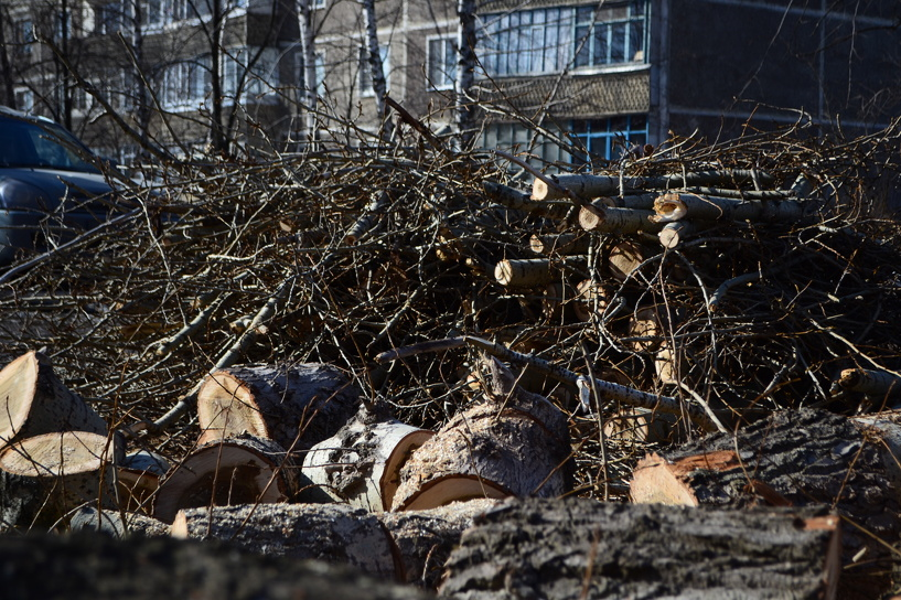 В городе приводят в порядок деревья