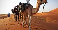В Тамбов прибудет «Корабль пустыни»