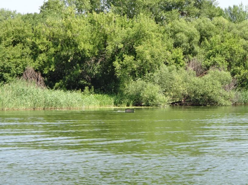 В Рассказово планируют провести экологическую расчистку рек