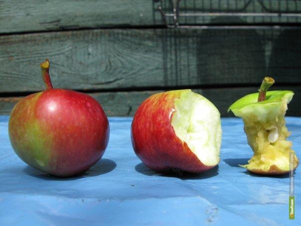 Тамбовщину ждет яблочный год